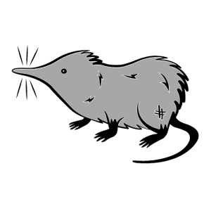 client-the-growling-shrew
